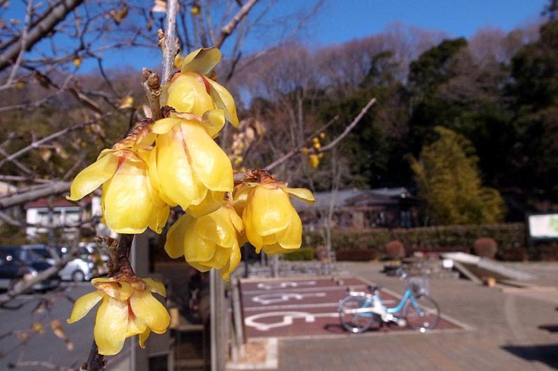2013年1月 冬の多摩丘陵散歩_d0054625_0241547.jpg