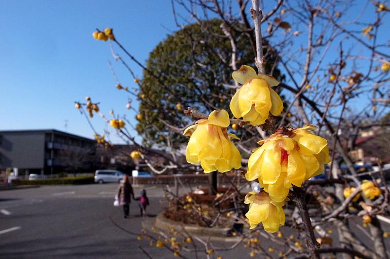 2013年1月 冬の多摩丘陵散歩_d0054625_024243.jpg