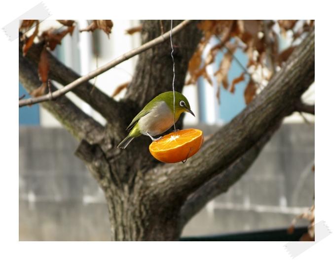 野鳥の楽園!_f0129726_2204670.jpg