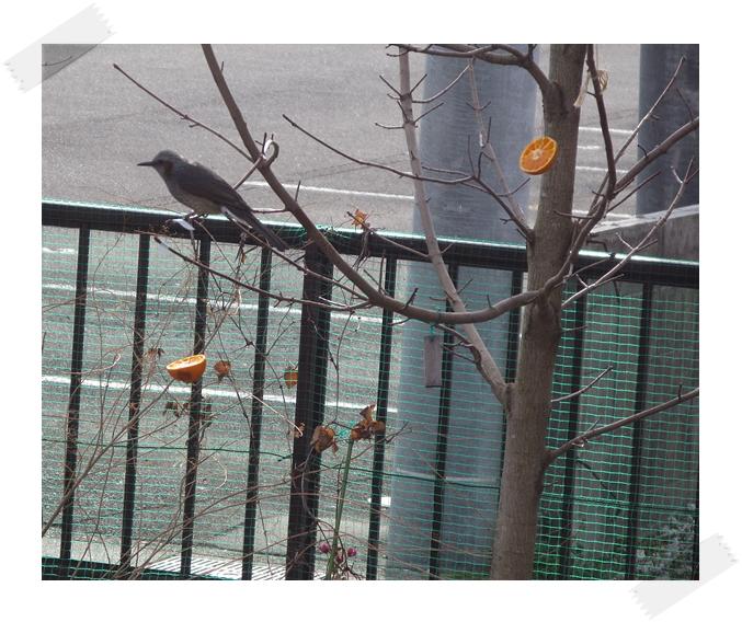 野鳥の楽園!_f0129726_22135872.jpg