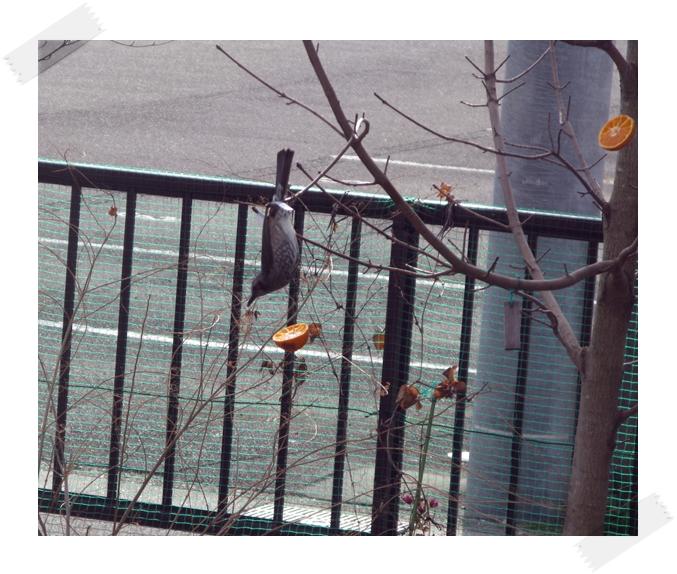 野鳥の楽園!_f0129726_221712.jpg