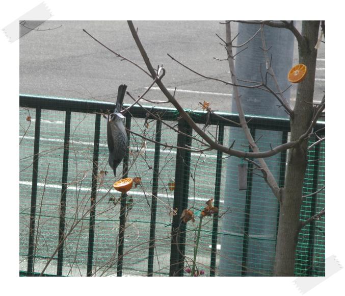 野鳥の楽園!_f0129726_2218058.jpg