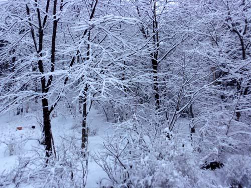 雪景色_d0127634_13173213.jpg