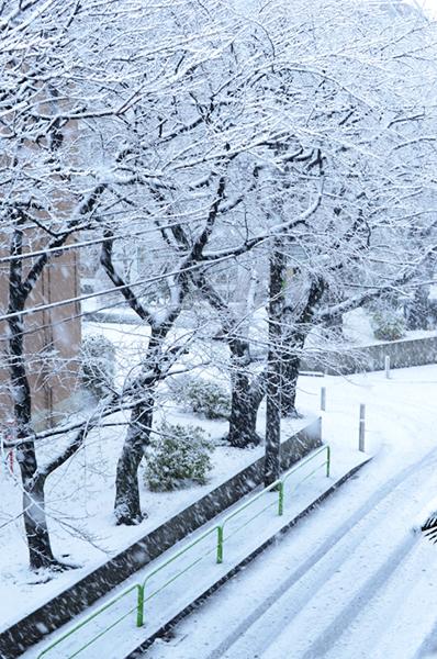 2013年1月の雪 01_a0003650_12371894.jpg
