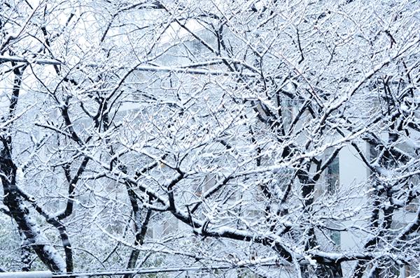 2013年1月の雪 01_a0003650_12372448.jpg