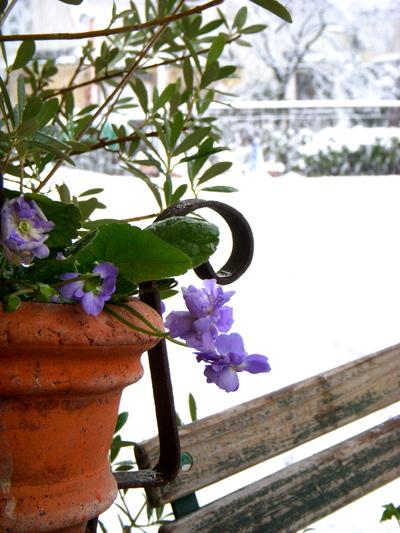 大雪のため臨時休業いたします。。。_a0229658_12322672.jpg