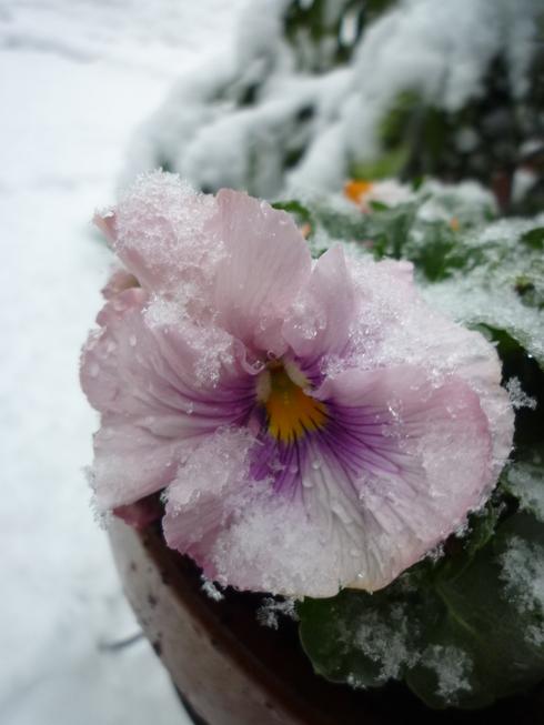代官山の 雪の日。。。と ゆきごんの おくりもの。☆♡⊹⊱..☆*:.。.☆*†_a0053662_1740898.jpg