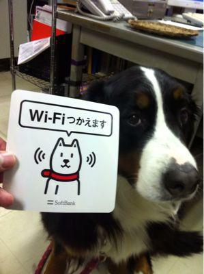 Wi-Fi  ビューン_b0185375_15584498.jpg