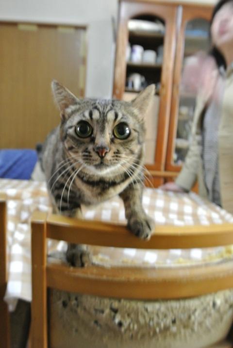 岐阜県で猫多頭飼い崩壊!猫たちを助けてくださいませんか?_c0167175_9315794.jpg