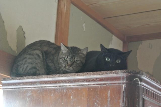 岐阜県で猫多頭飼い崩壊!猫たちを助けてくださいませんか?_c0167175_9332748.jpg