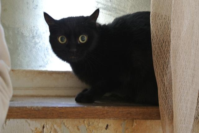 岐阜県で猫多頭飼い崩壊!猫たちを助けてくださいませんか?_c0167175_9334457.jpg