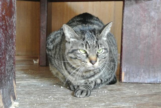 岐阜県で猫多頭飼い崩壊!猫たちを助けてくださいませんか?_c0167175_9335739.jpg