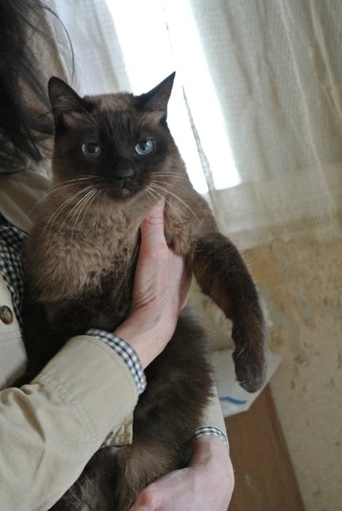 岐阜県で猫多頭飼い崩壊!猫たちを助けてくださいませんか?_c0167175_9341255.jpg