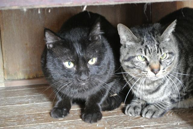 岐阜県で猫多頭飼い崩壊!猫たちを助けてくださいませんか?_c0167175_9344447.jpg