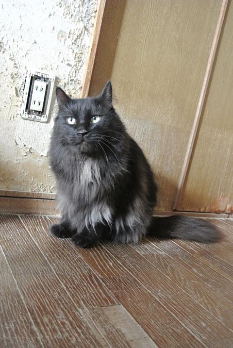 岐阜県で猫多頭飼い崩壊!猫たちを助けてくださいませんか?_c0167175_9345854.jpg