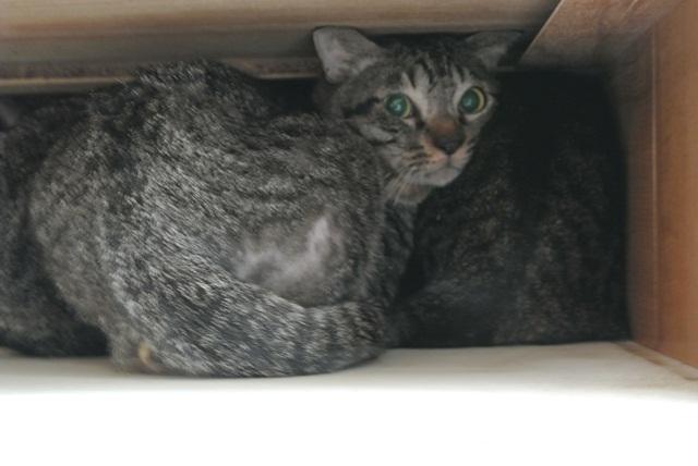 岐阜県で猫多頭飼い崩壊!猫たちを助けてくださいませんか?_c0167175_9352580.jpg