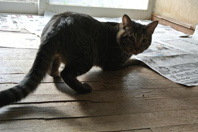 岐阜県で猫多頭飼い崩壊!猫たちを助けてくださいませんか?_c0167175_9354567.jpg