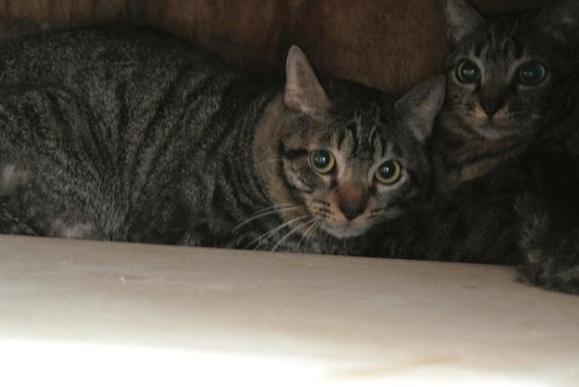 岐阜県で猫多頭飼い崩壊!猫たちを助けてくださいませんか?_c0167175_935584.jpg