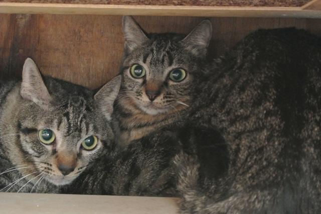 岐阜県で猫多頭飼い崩壊!猫たちを助けてくださいませんか?_c0167175_9361122.jpg