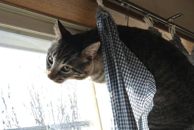 岐阜県で猫多頭飼い崩壊!猫たちを助けてくださいませんか?_c0167175_9374893.jpg