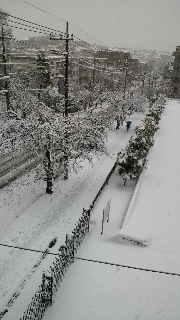 大雪!_e0130779_14392266.jpg