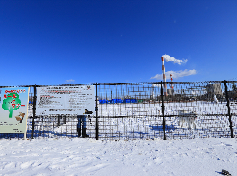 広い立派なドッグラン 雪があるから綺麗 こりゃ喜ぶわ_a0160581_1921552.jpg