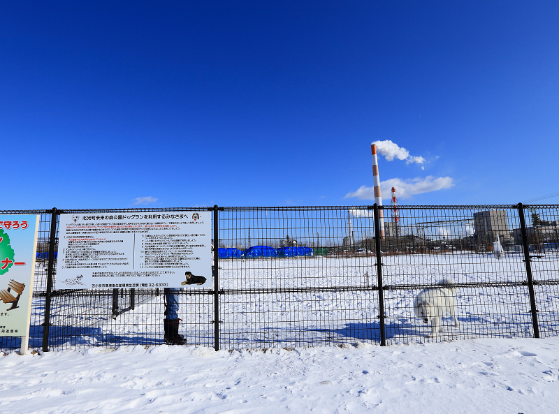 広い立派なドッグラン 雪があるから綺麗 こりゃ喜ぶわ_a0160581_1922568.jpg