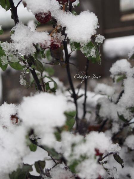 びっくりする程の大雪で007もこたつで休んでいます。_d0266681_11125485.jpg