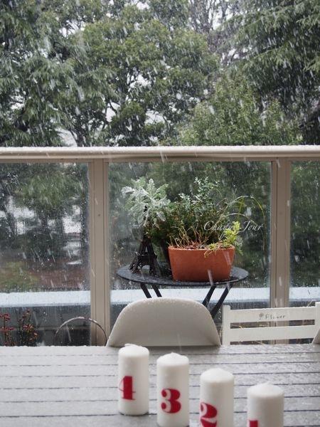 びっくりする程の大雪で007もこたつで休んでいます。_d0266681_1113377.jpg