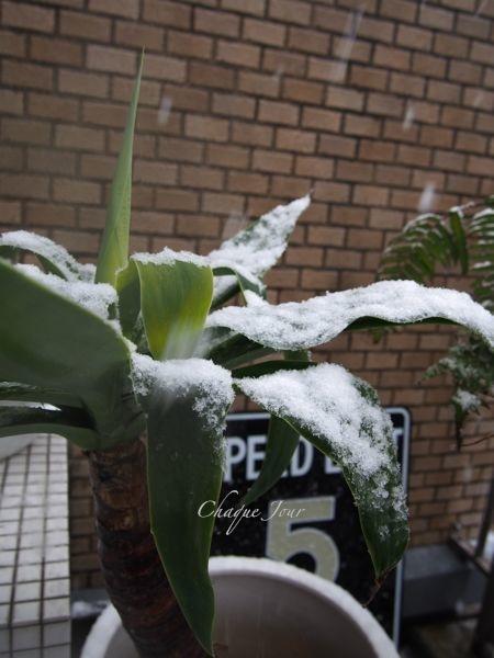 びっくりする程の大雪で007もこたつで休んでいます。_d0266681_11134573.jpg