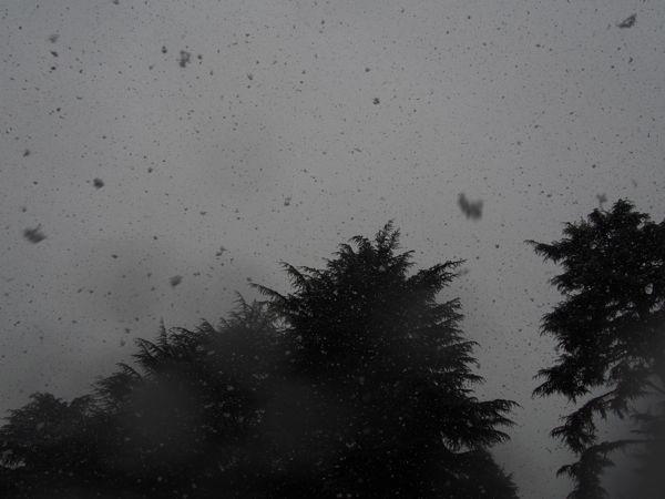 びっくりする程の大雪で007もこたつで休んでいます。_d0266681_11144238.jpg