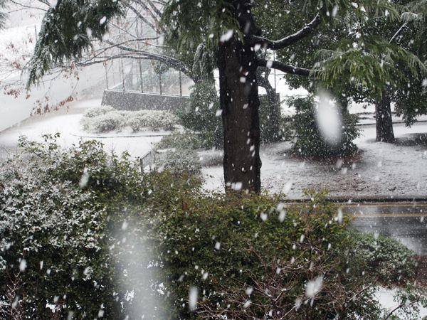 びっくりする程の大雪で007もこたつで休んでいます。_d0266681_11145589.jpg