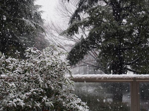 びっくりする程の大雪で007もこたつで休んでいます。_d0266681_1115990.jpg