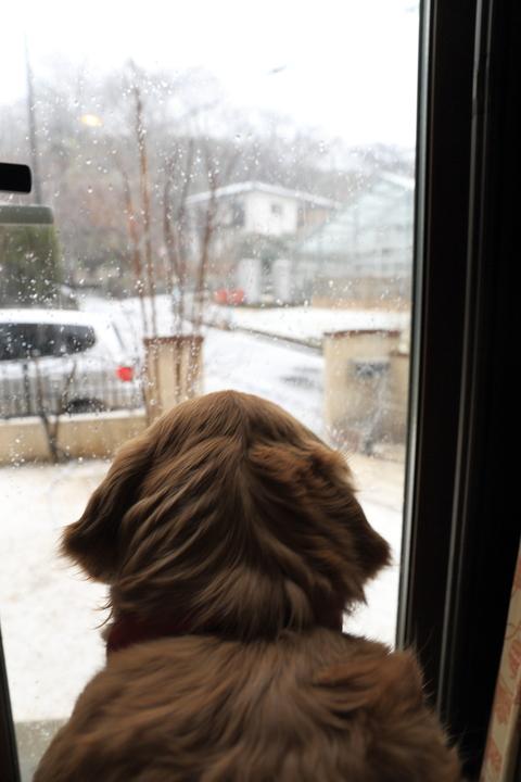 雪が降りました!_b0275998_22161918.jpg