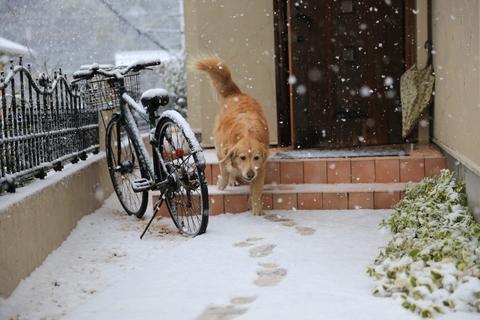 雪が降りました!_b0275998_22183492.jpg