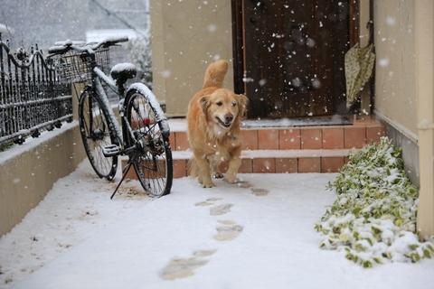 雪が降りました!_b0275998_22202460.jpg