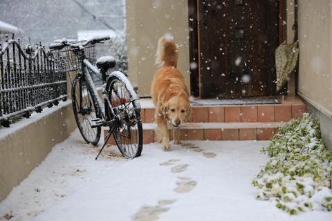 雪が降りました!_b0275998_2220258.jpg