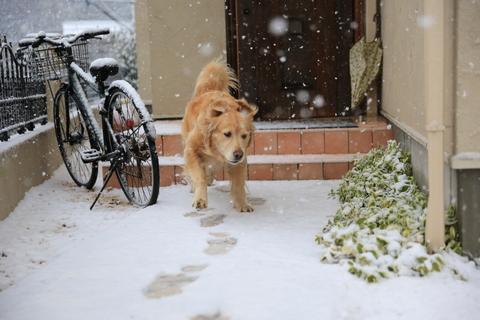 雪が降りました!_b0275998_22204933.jpg