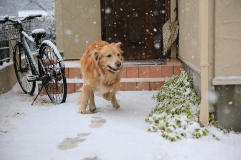雪が降りました!_b0275998_22211633.jpg