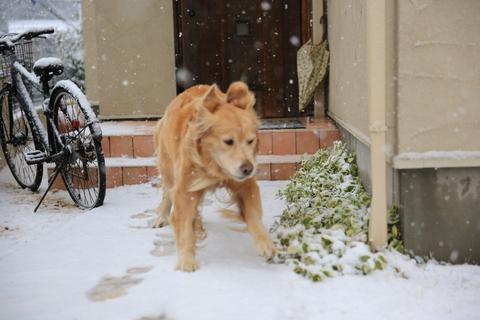 雪が降りました!_b0275998_22214613.jpg