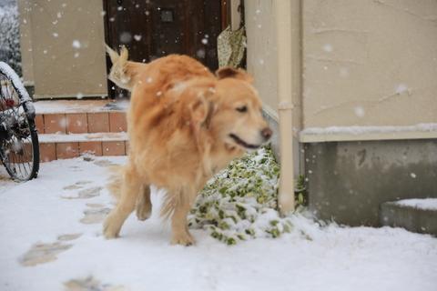 雪が降りました!_b0275998_2222595.jpg