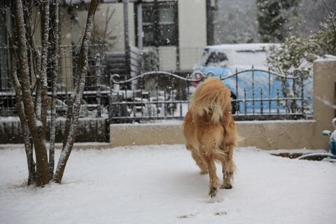 雪が降りました!_b0275998_22351285.jpg