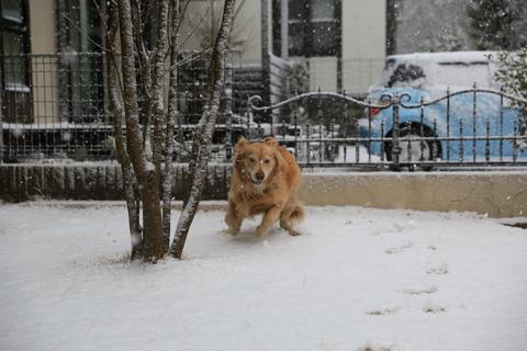 雪が降りました!_b0275998_22365041.jpg