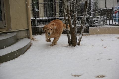 雪が降りました!_b0275998_22383829.jpg