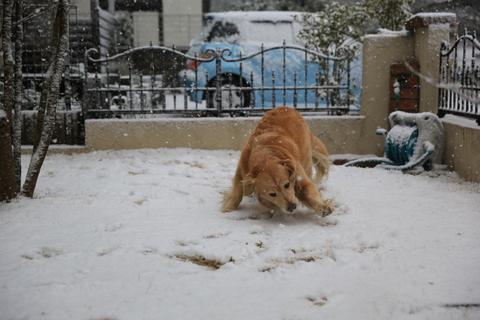 雪が降りました!_b0275998_22395549.jpg