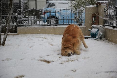 雪が降りました!_b0275998_2241308.jpg