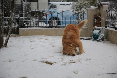 雪が降りました!_b0275998_2241695.jpg