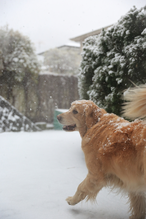 雪が降りました!_b0275998_22575323.jpg
