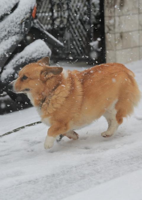 雪が降りました!_b0275998_23214435.jpg