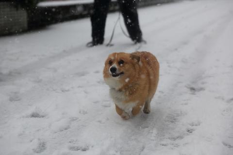 雪が降りました!_b0275998_23382295.jpg